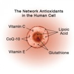 Human cell and network antioxidants